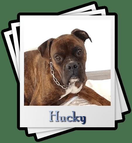 Hucky