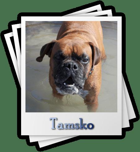 Tamsko