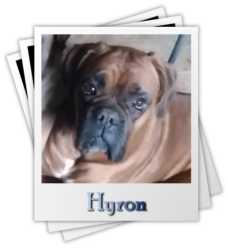 Hyron