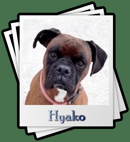 Hyako