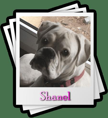 Shanel
