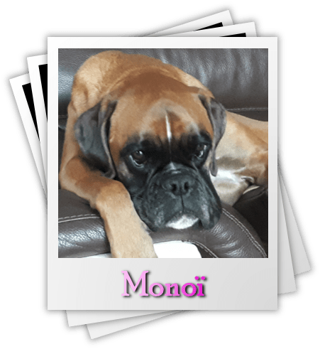Monoï