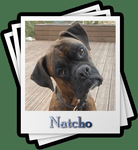 Natcho