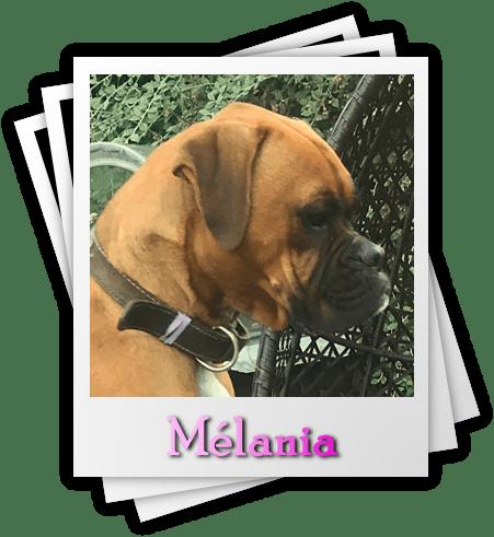 Mélania