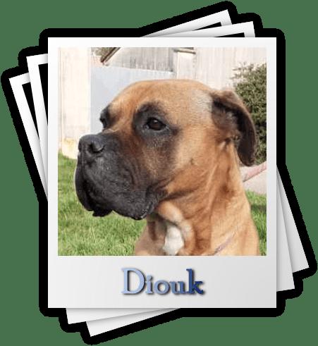 Diouk